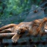 『経済破綻ベネズエラの動物園で多くの動物たちが餓死』の画像