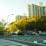 『【南千里】 阪急南千里駅周辺のイチョウ並木』の画像