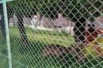 交野小学校に『鹿』が出たみたい!~どこから来たのか謎だ!~