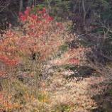 『晩秋の紅葉』の画像