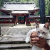 子猫レオンの旅行記1!日光東照宮に参る!の写真