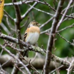 花鳥いろいろ 四季の野鳥