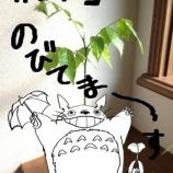 『夏のマメりん』の画像