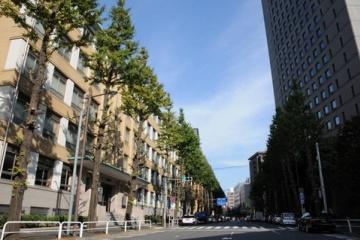 海外「日本を信じてる」千代田区の樹木伐採の中止を願う海外の人々
