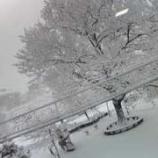 『今年はよく降る雪』の画像