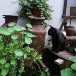 『猫のサナトリウム』の画像