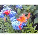 『紫陽花のある風景』の画像