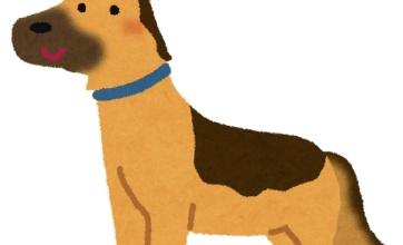 行方不明者を探して行方不明になった警察犬を発見きたああああああああああ