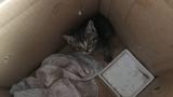 子猫を保護したんだが生後何ヶ月ぐらいか教えてほしい(※画像あり)