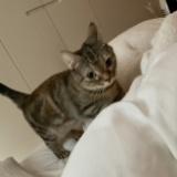 指原莉乃の猫かわいすぎるwww