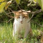 画像フォルダは猫ばかり