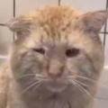年老いたネコを保護施設から引き取った…