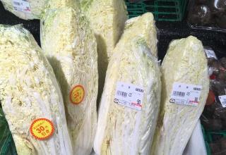 【暖冬】白菜1/4が20円だったんやがwwww