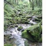『探訪奥多摩の自然7「美しい苔の谷」』の画像