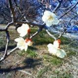 『春 の出会い』の画像