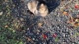 ワウがスマホ触って道塞いでたせいで野良ネッコさん日向ぼっこ開始(※画像あり)