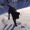 うちのイヌが雪の上で「ロデオ」になった件…