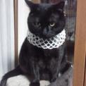 我が家のシャノワール(黒猫ちゃん)◆休憩♪