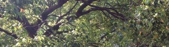 冒険菜園の「別館」 イメージ画像