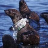 『「海洋動物が私たちのプラスチックゴミのために死にかけている」 2017/02/05』の画像
