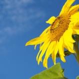 『夏の思い出』の画像