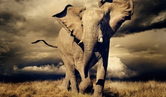 もう怒ったぞう・・仲間を殺されたゾウの群れが人類に復讐【インド】
