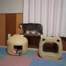 (子猫その32)先住猫と子猫の距離が縮まってる件とふとんにションションされてる飼い主と(猫1459)