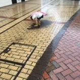 『土砂降りでも』の画像