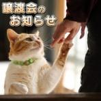 募集猫たち