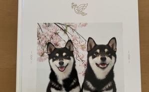 愛犬たちの写真をアルバムにまとめたら