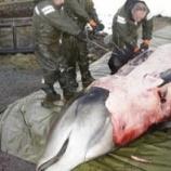 『クジラを安楽死 大量のプラスチックが胃から発見 ノルウエー』の画像