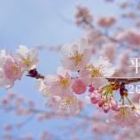 『【動画】 2019年 3月 平井 桜 (RX1)』の画像