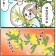 春発見!ミモザが咲いた〜