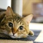 猫が飼い主のトイレやお風呂上がりをドア前で待つのはなぜ?