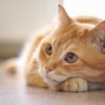 猫飼いたいんだけど猫に詳しい人いる?