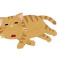 猫さん、ダイナミック日向ぼっこしてしまうwwwwwwww