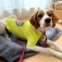 人気のプチプラ犬服買ってみました