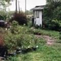 【ネコ】 うちの庭にはよく猫が現れる。呼んでみた → こうなった…