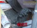 【速報】テレ東系「ドリームハウス」がトラブルで神回wwwwwww(画像あり)