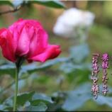 『庭のしょうび』の画像