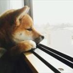 クソ寂しい時どうしてる?