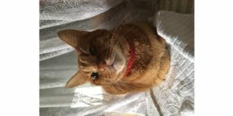 【いい話】10年前、母がゾンビみたいな子猫を拾ってきた。唖然としてたら母が「可愛いでしょ?」とニコニコ。それからが家族全員大変だった
