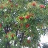 『秋の色合い』の画像