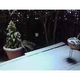 『大雪の成人式』の画像