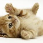 【悲報】ネコは飼い主の事をどうでもいいと思っている事が判明…