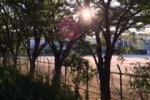 免除川沿いは木漏れ日も素敵なところ!~室町時代に今の川ができたみたい~