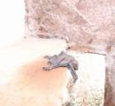 【画像】庭にコウモリの赤ちゃんがいるんだけど…