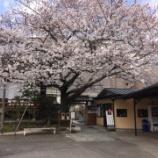 『天妙国寺の桜(東京都品川区)』の画像