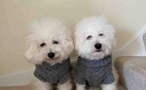 セーターを作ってもらって満足♪