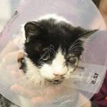 【奇跡の猫】事故で埋葬された猫が地中から這い出して帰宅